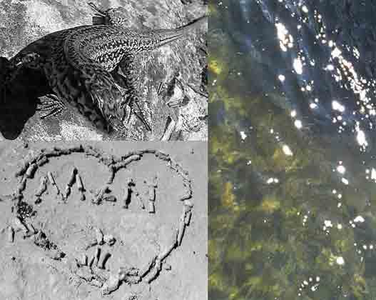 una largatija (enamorada) al sol de Formentera